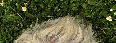 Haarsprietjes